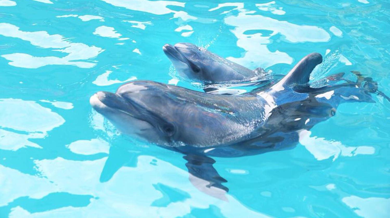 Заплывшего в реку дельфина спасли в Сочи