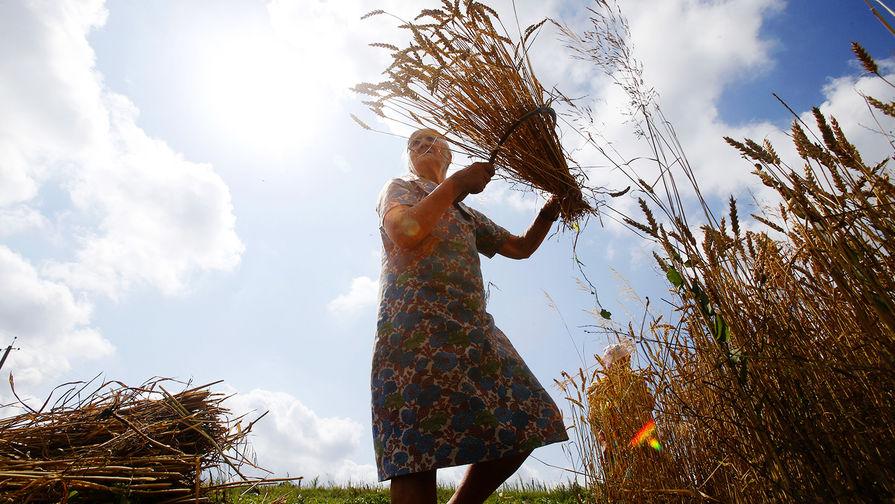 Россия приостановила экспорт зерновых за пределы ЕАЭС до 1 июля
