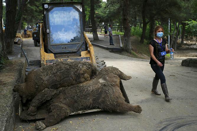 Животные зоопарка Тбилиси, погибшие в результате сильного ливня и наводнения в ночь на 14 июня