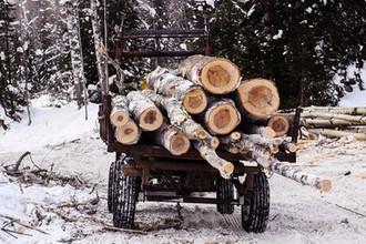 Лысая Россия: как остановить расхищение леса