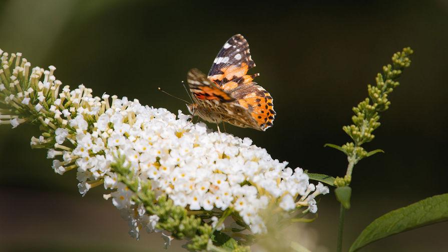 """""""Последствия будут катастрофическими"""": насекомые вымрут за век"""