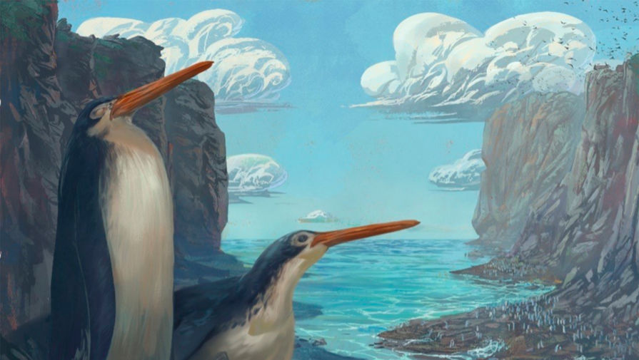 Новозеландские юннаты откопали новый вид гигантских пингвинов