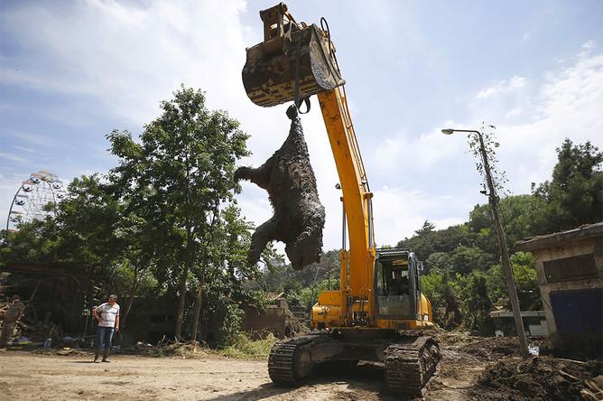 Медведь, погибший в результате сильного ливня и наводнения в ночь на 14 июня