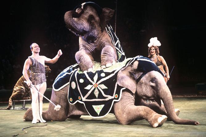 Мстислав и Долорес Запашные на арене Большого Московского государственного цирка на проспекте Вернадского, 1979 год