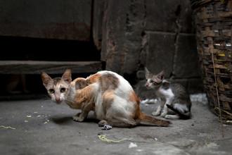 Грязь и кошки — от лени