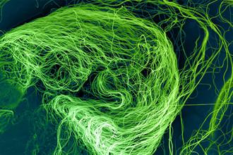 Изображение нановолокон со сканирующего микроскопа