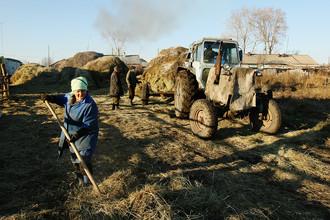 Уборка сена в деревне Юный Пионер в Новосибирской области, 2012 год