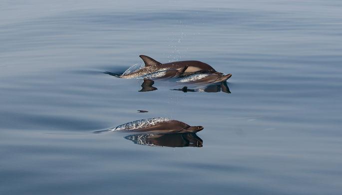 Впервые за 30 лет: как РАН и «Роснефть» изучали дельфинов Черного моря
