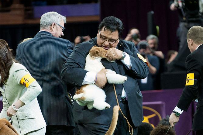 Победитель выставки Westminster Kennel Club Dog Show- фокстерьер по кличке Скай с хозяином