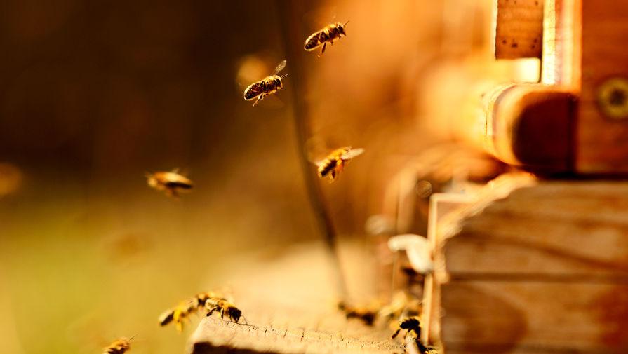 Ученые обнаружили способность пчел решать математические задачи