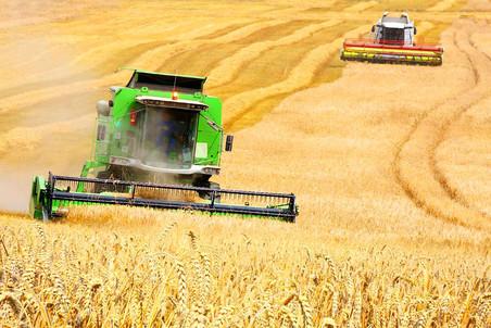 Аграрии не могут отыскать выгодных условий для бизнеса и заполнить рынок продуктами