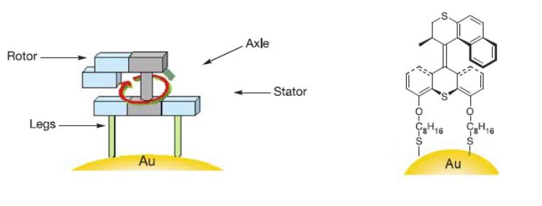 Молекулярный мотор