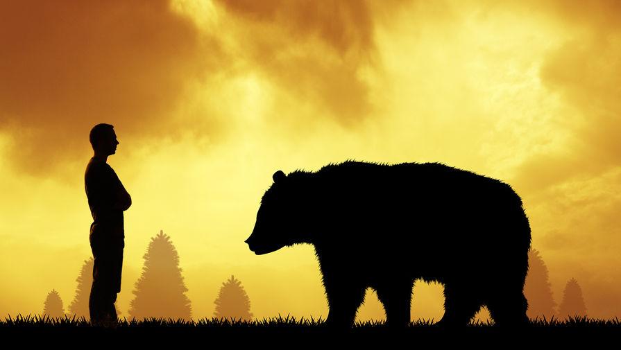 Жителя Приморья госпитализировали после нападения медведя