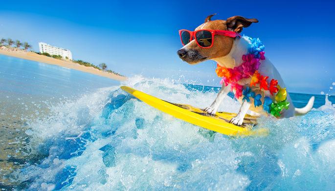 Борьба за территорию: собак могут пустить на пляжи