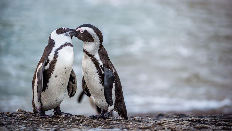 В Брянский музей пришли пингвины
