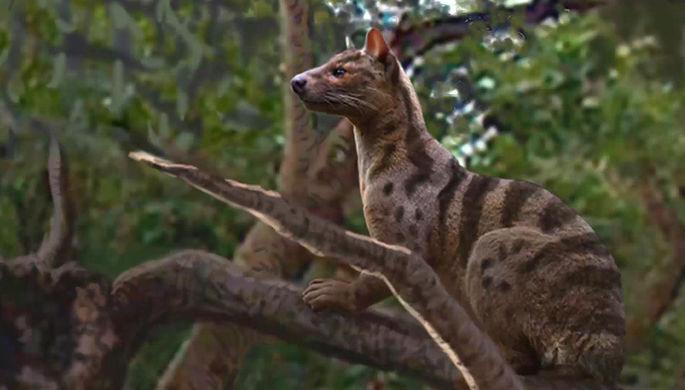 В Африке найден новый вид древних хищников — Pakakali