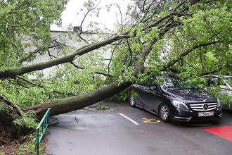 Последствия урагана в одном из районов Москвы