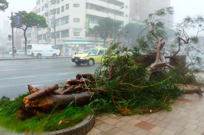 Рухнувшие из-за сильных ветров деревья на южном японском острове Окинава