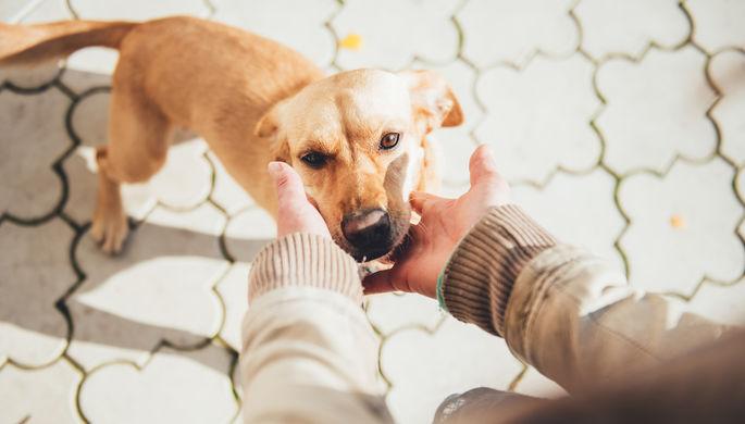 Ковид вокруг нас: биолог рассказала об опасности животных