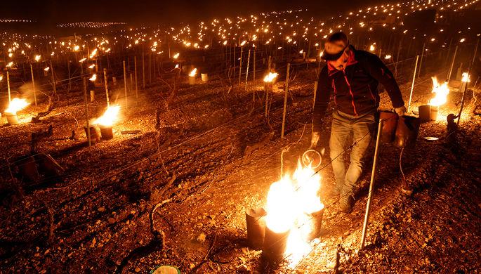 «Катастрофа с вином»: заморозки во Франции ударят по кошельку россиян