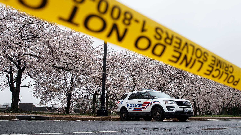 Во время сезона цветения сакуры в Вашингтоне, США, март 2020 года