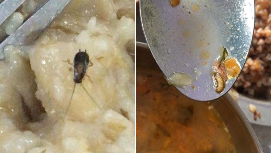 Украинских курсантов-летчиков кормили червями и тараканами - фото