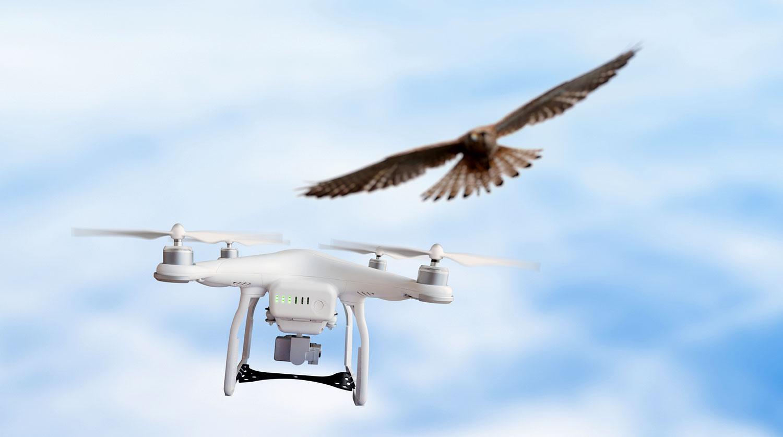 Минтранс намерен ввести обязательную регистрацию дронов