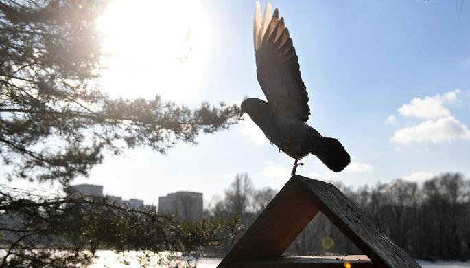 Аномальный февраль: какая погода ждет Россию