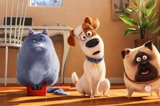 «Тайная жизнь домашних животных» и другие премьеры этой недели