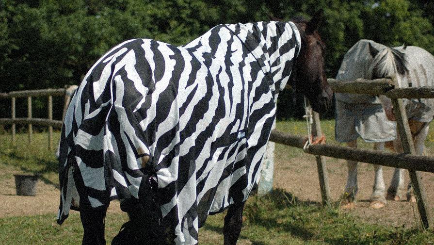 Потому и не кусают: зачем зебрам полоски