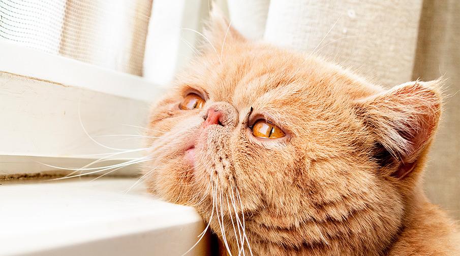 Не пугайте котов огурцами
