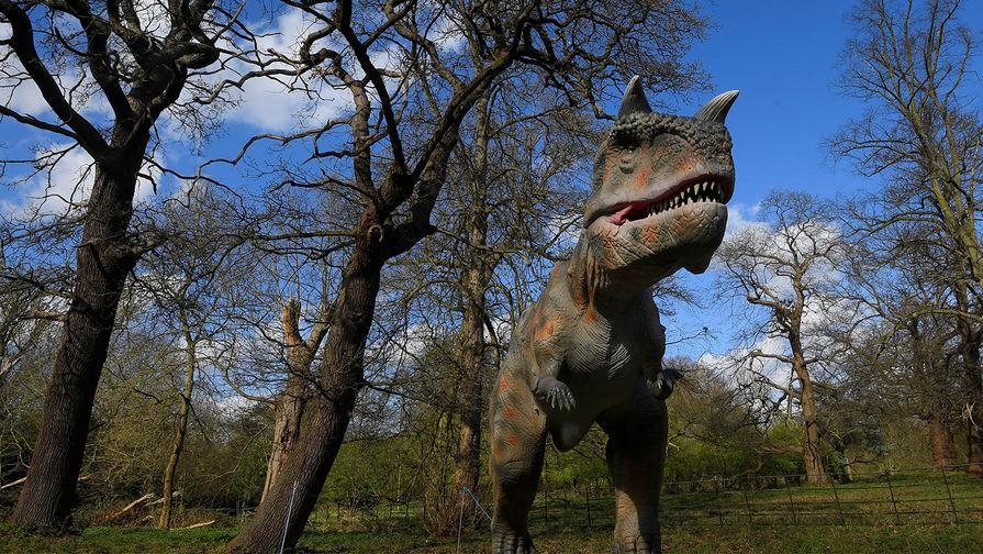 Окаменелый след тираннозавра найден в Китае