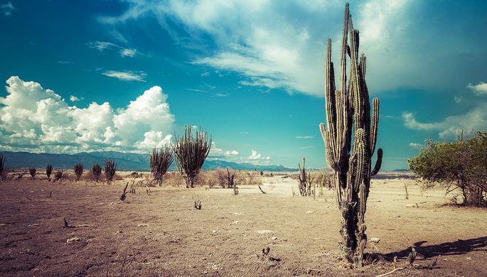 Почему в пустыне невозможно бросить курить