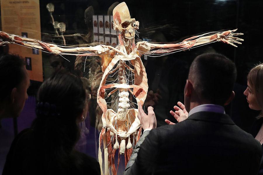 Экспонат анатомической выставки доктора Гюнтера фон Хагенса «Мир тела» (Body Worlds) наВДНХ вМоскве