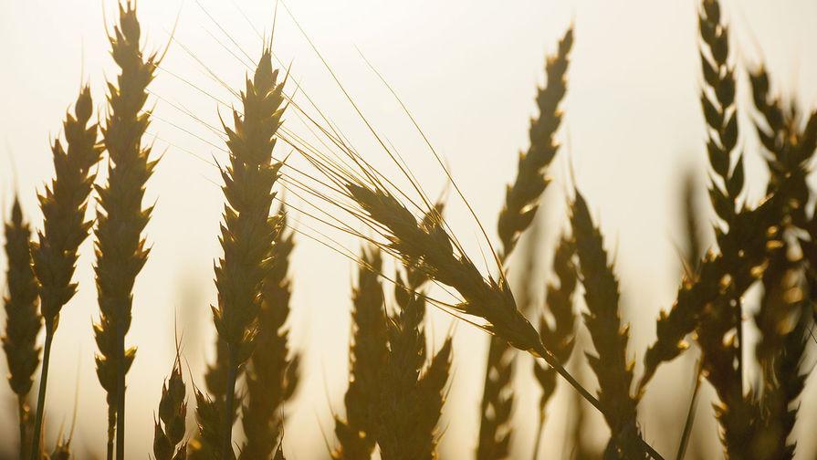 Ъ: стоимость российской пшеницы достигла рекорда 2014 года