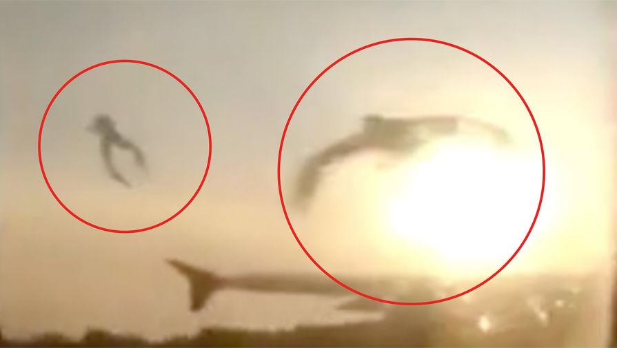 Орнитолог рассказал об опасных для самолетов видах птиц