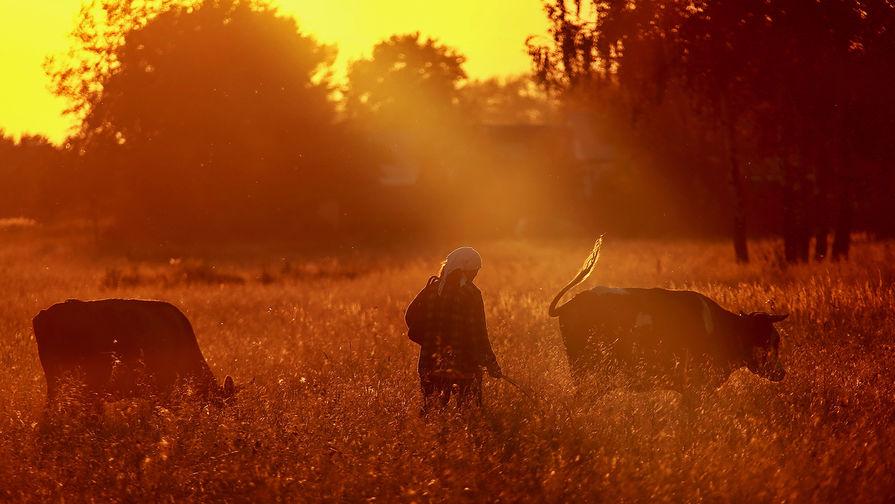 Задушила и выбросила в реку: тувинка отомстила племяннице из-за коров