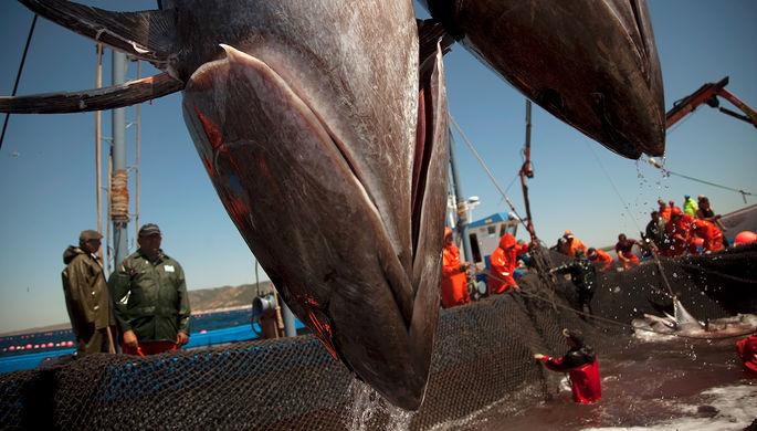 Глубинный брекзит: Британия и Евросоюз не поделили рыбу