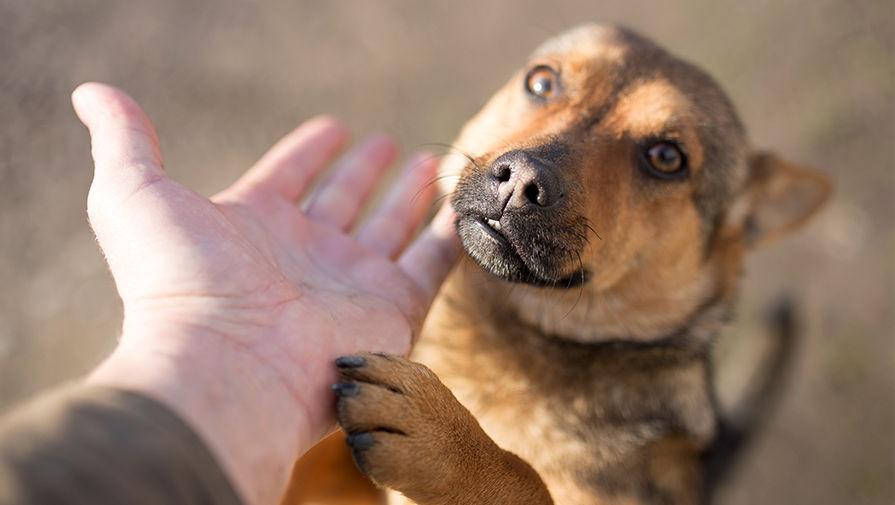 Картинки по запросу В России может появиться уполномоченный по правам животным