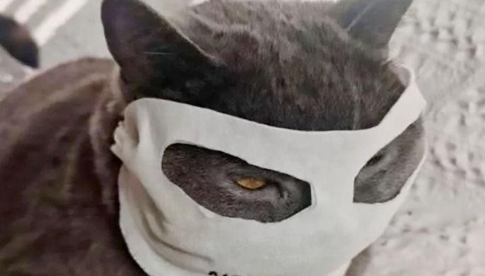 Суп с котом: в Китае запретили есть домашних животных