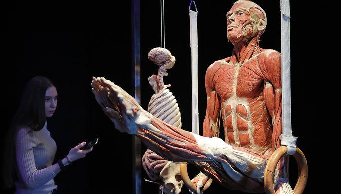 Экспонаты анатомической выставки доктора Гюнтера фон Хагенса «Мир тела» (Body Worlds) на ВДНХ в Москве