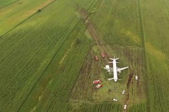 На месте аварийной посадки самолета A321 «Уральских авиалиний» в Подмосковье, 15 августа, 2019 года (кадр из видео)