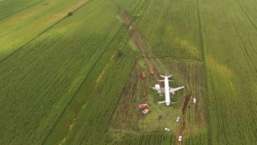Кукуруза и чайки: каким может быть фильм о посадке A321 под Жуковским