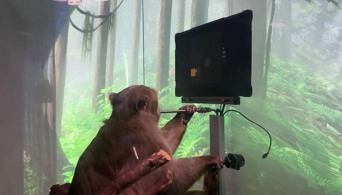 «Ждите в Twitch»: Маск научил обезьяну играть в пинг-понг силой мысли