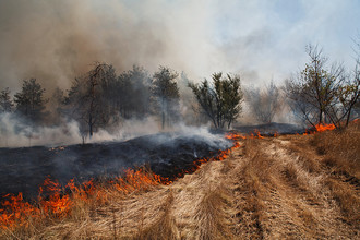 В Забайкалье введен режим ЧС из-за лесных пожаров