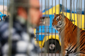 Цирк запретов: к чему ведет дрессура россиян