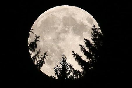 Впервые найдено растение, которое для размножения ждет полной Луны