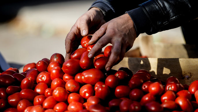 Минсельхоз РФ подготовил документ по возобновлению поставок томатов из Турции