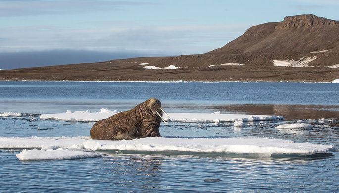 Уступаете России: США сдают позиции в Арктике