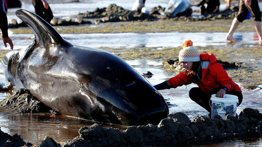 Дельфины взрываются на пляже!